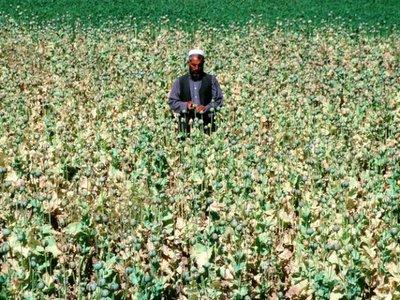 arkimed200305opium_nangahar_afghanistan640-778663